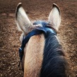 View from the Saddle 1: Chicco